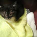Krankes Kitten