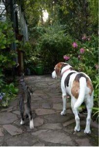 Hund und Katze gehen gemeinsam ihren Weg